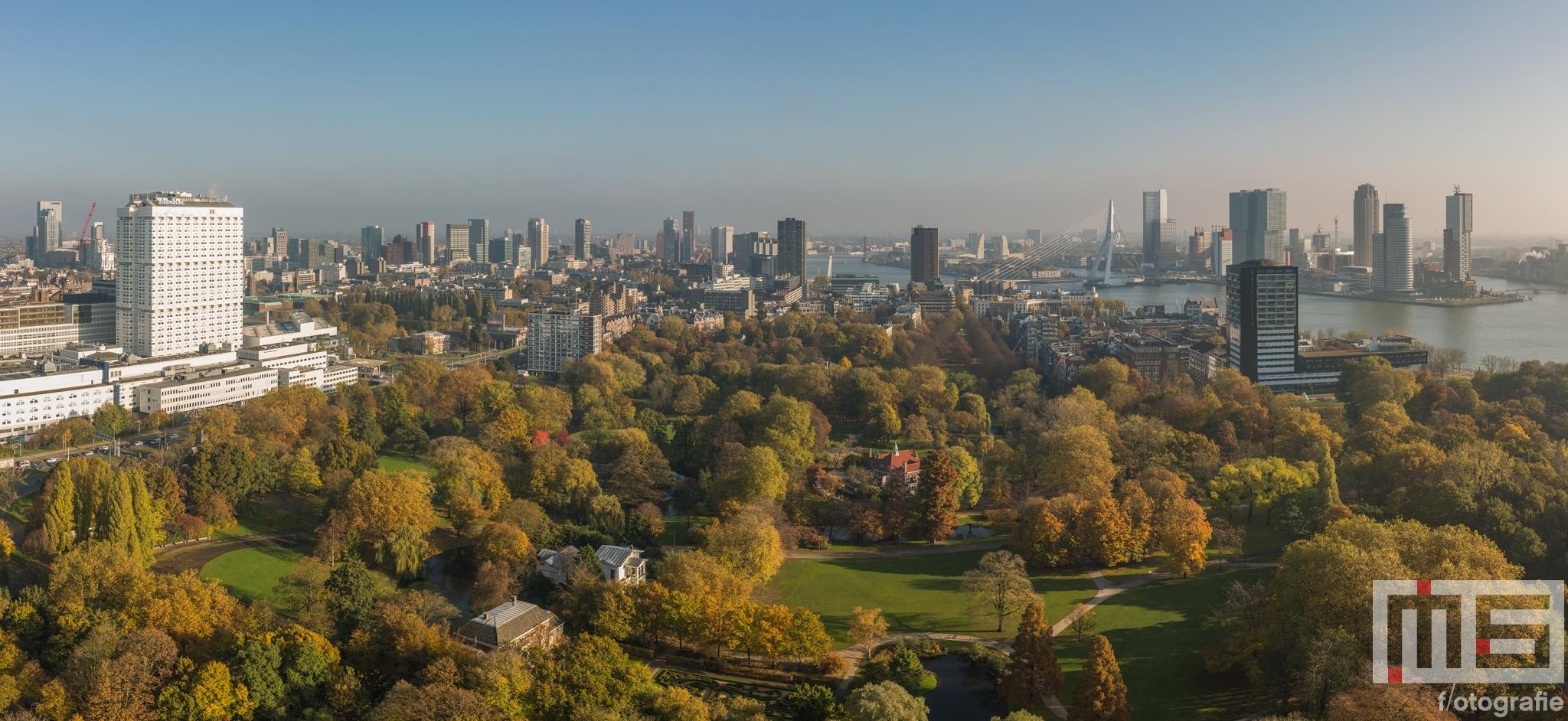 Te Koop | Herfst in Het Park in Rotterdam