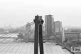 Te Koop | De Willemsbrug in Rotterdam in zwart/wit
