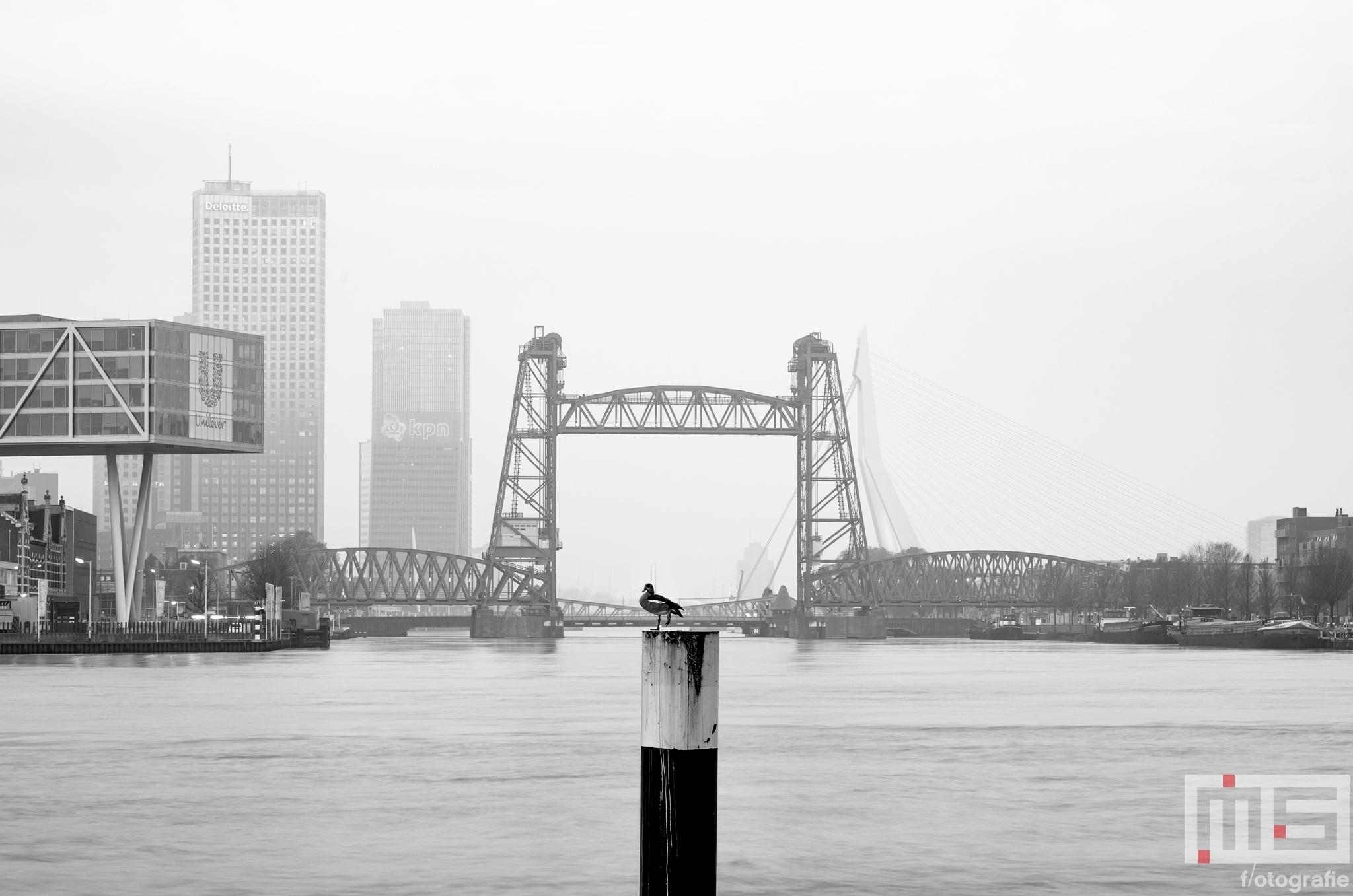 Te Koop | De Hef en het Noordereiland in Rotterdam in zwart/wit