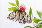Het vlinderpark Jardin des Papillons in Grevenmacher in Luxemburg