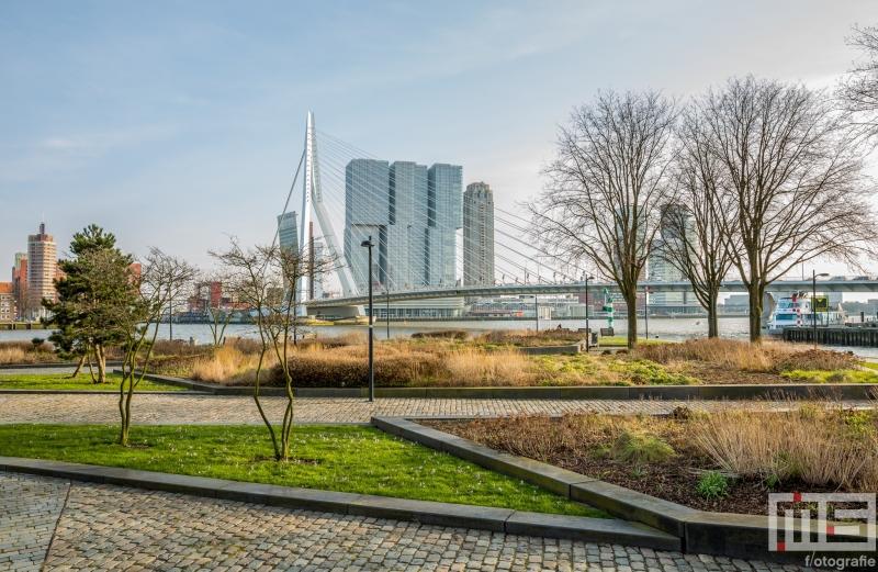 Te Koop | Het Park bij de Erasmusbrug in Rotterdam in herfstkleuren