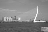 Te Koop | De Erasmusbrug in Rotterdam by Day in zwart/wit