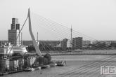 Te Koop | Het cruiseschip Ms Rotterdam met de Erasmusbrug in Rotterdam