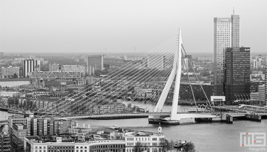 De Erasmusbrug en de Maastoren in Rotterdam by Day | Cover Small