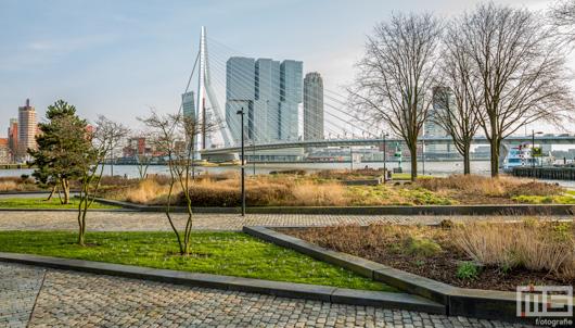 Het stadspark aan de voet bij de Erasmusbrug in Rotterdam in herfstkleuren | Cover Small